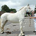 Concours élevage local - thérouanne 2016