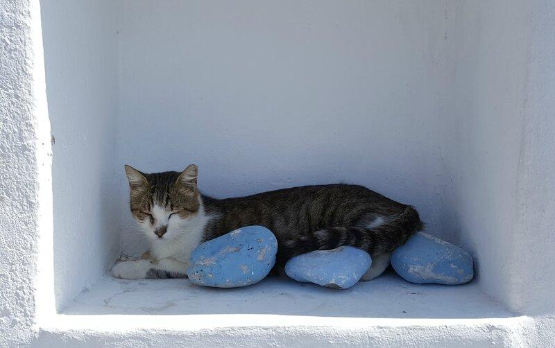 Pas d'île grecque sans chat!