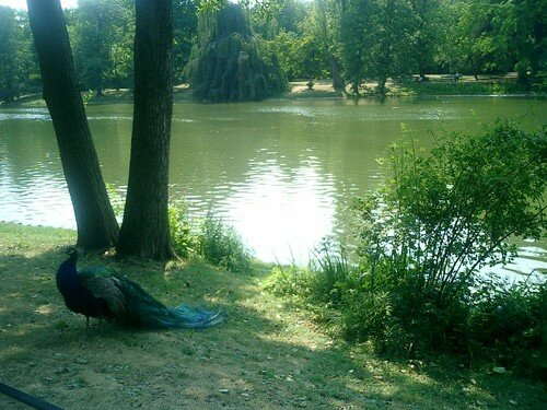 parc de Lazienki Krolewskie