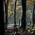 Le bois des Girondins (4)