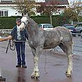 Concours de poulains - marquise 2014