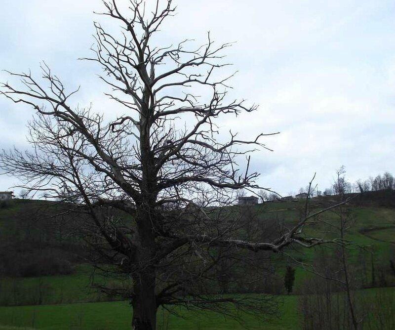 arbre-mort (2)