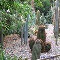 Jardin Majorelle, cactées 1