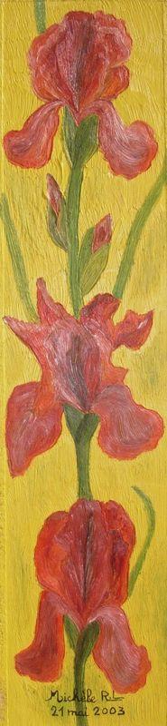 028 - 21052003 - Trio d'iris cuivrés