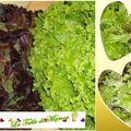 Gratin de salade