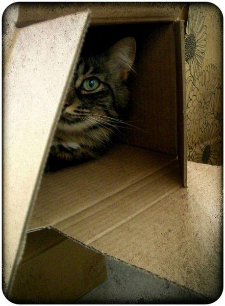 mooli box