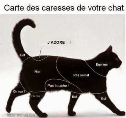 CARESSE CHAT
