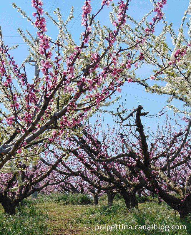 printemps-region-pouilles
