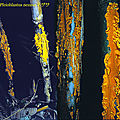 Stereostratum corticioides_1990_0427montjpg