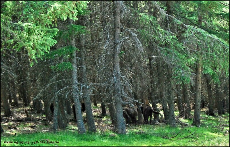 7-Bisons-SteEulalie