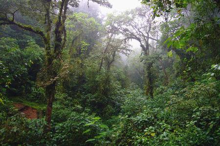 Landscape_Monteverde__20_