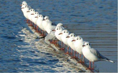 non-conformisme