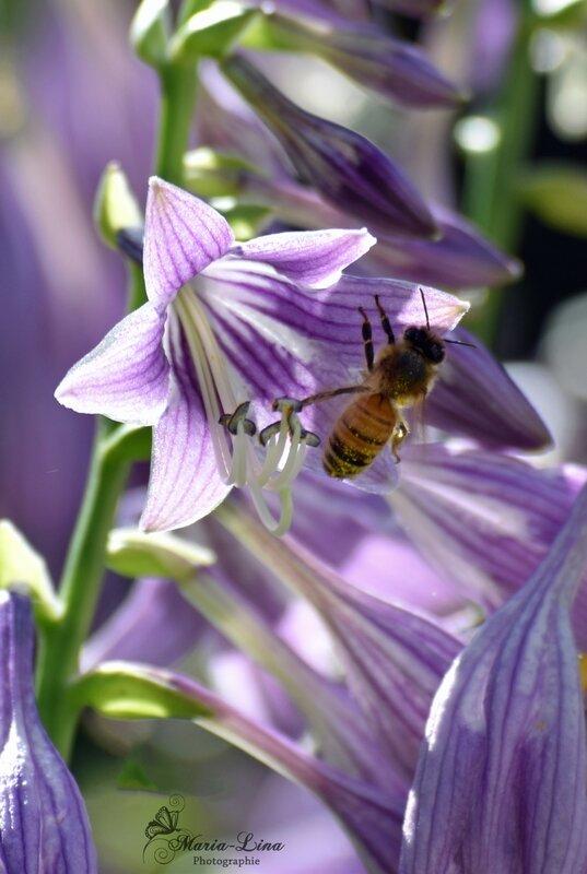 abeillefleur copie
