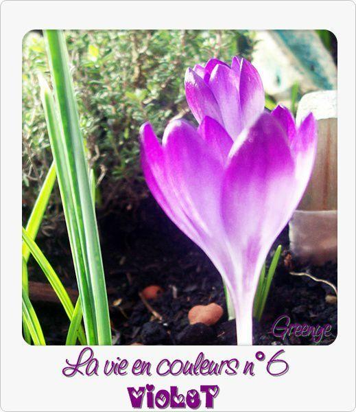 06 violet'
