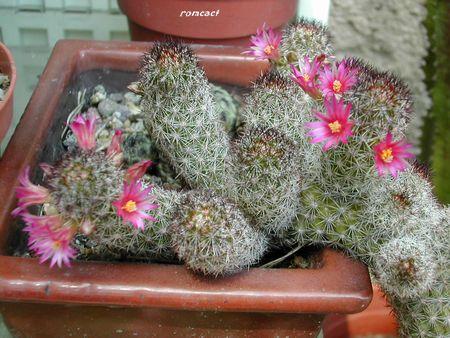 cactus_250