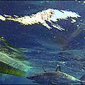 Bastia requin mako !...