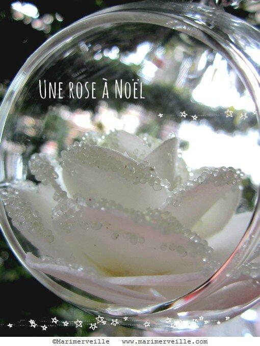 une rose à noël - Marimerveille