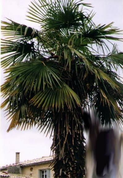 02 le palmier de la maison photo de la maison ctabanon for La maison du palmier