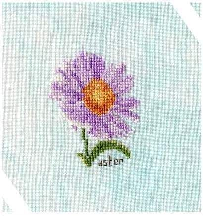 Aster - ( Orbispictura)