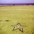 cheveaux contemplés par étoile de mer yurtao