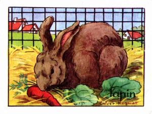 bon_point_image_calvet_rogniat_lapin_bis