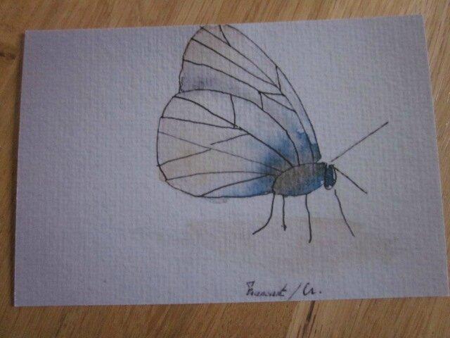 Insecte IX (2)
