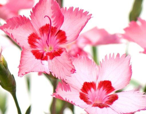 Jappie_eu_Brievenbus_(RVS)_-__Roze_bloemen_04