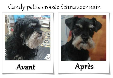 DOG CHRIS AVANT APRES CANDY