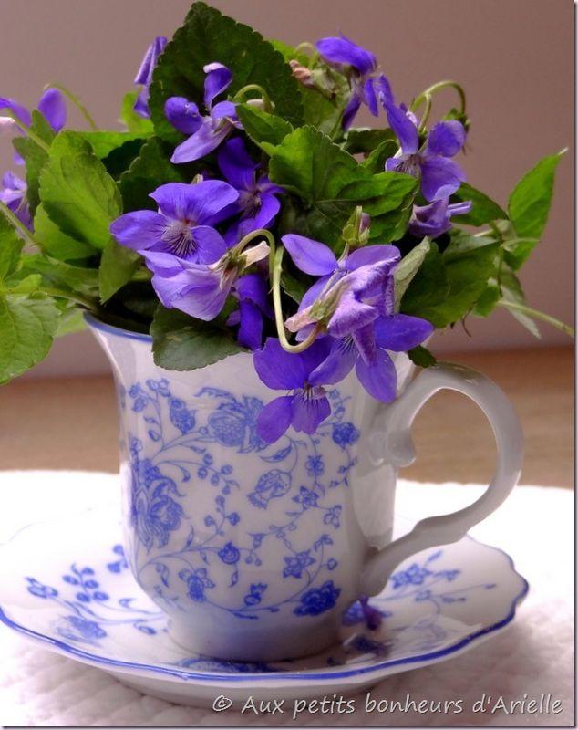 Violettes (8)
