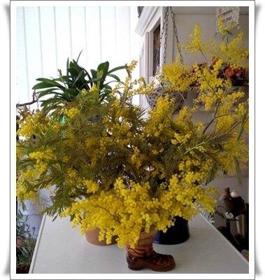 bouquet Mars