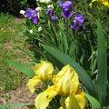Quelques fleurs pour le we ...