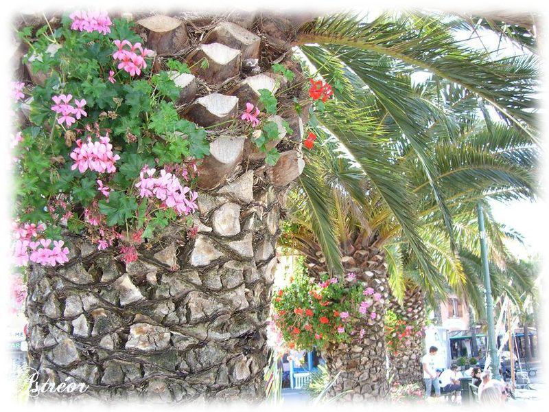 Les palmiers fleuris