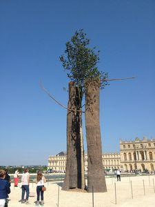 45 Exposition Penone, Jardin du chateau de Versailles, Paris
