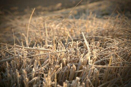 herbes givrées