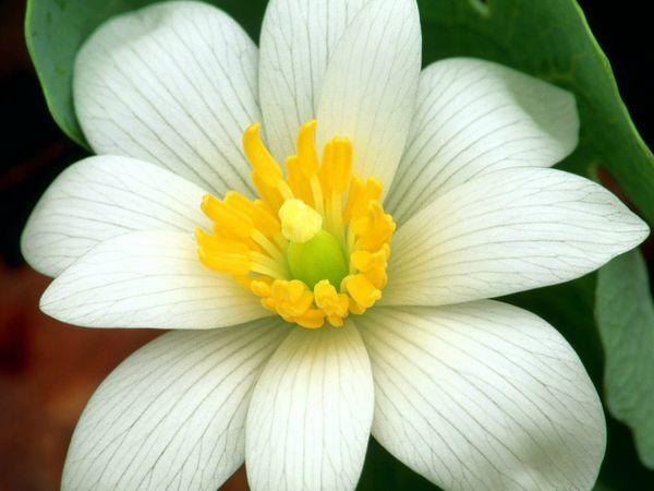 fleurs_67