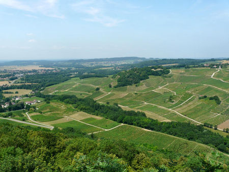 vignoble_Chateau_chalon