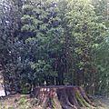 Tronc d'arbre coupe