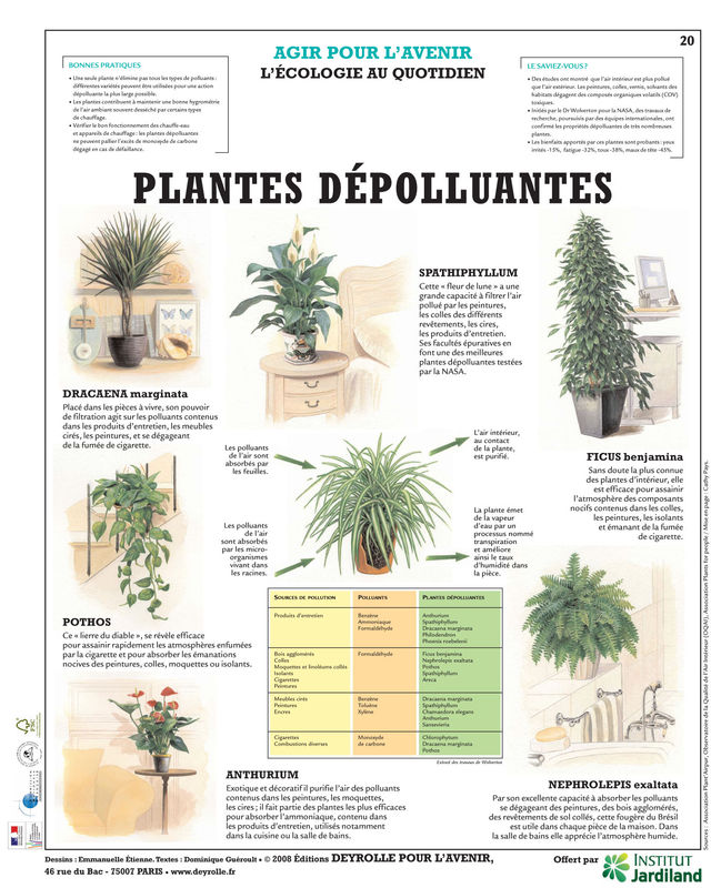 Plantes d polluantes chic bio for Plantes depolluantes