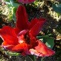 Fleurs, nature ...
