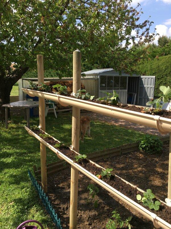 Mes fraisiers prennent de la hauteur la cuisine de - Jardin potager en hauteur ...