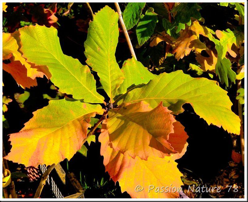 Feuilles en automne (22)