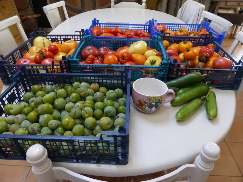 22-tomates, concombres, prunes (1)