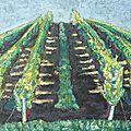 Arcure: venez vendanger les vignes de fonchalon aux récollets à cognac...