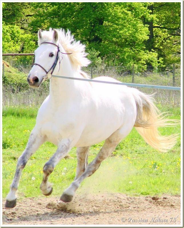 Dressage des chevaux 14