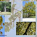 Canicule et patricia kaas : notre actualité brûlante ! / fleurs de bach : variées + clematis, red chestnut, apsen, oak, elm...