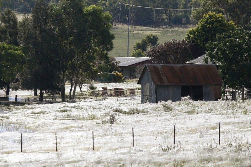 Quand-une-pluie-d-araignees-s-abat-en-Australie