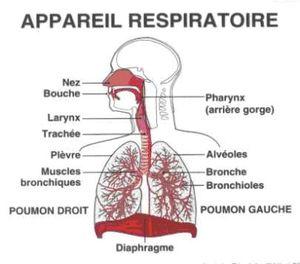appareil-respiratoire