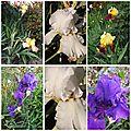 Ciel 10 06 & fleurs (27)