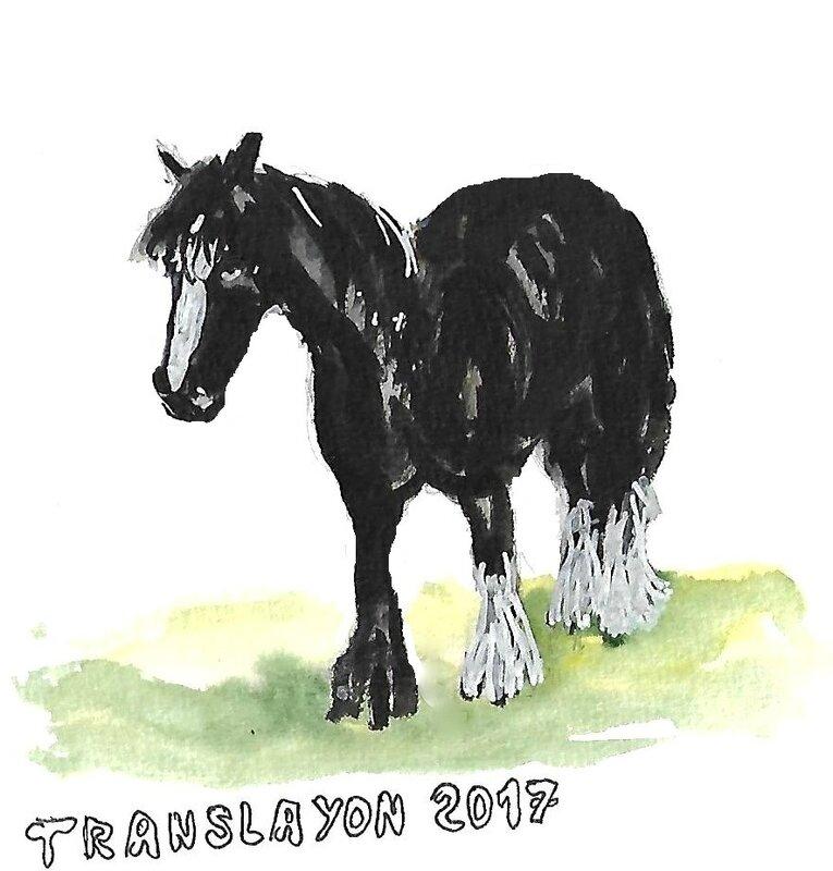 translayon 2017 1