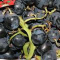 Raisins bleus